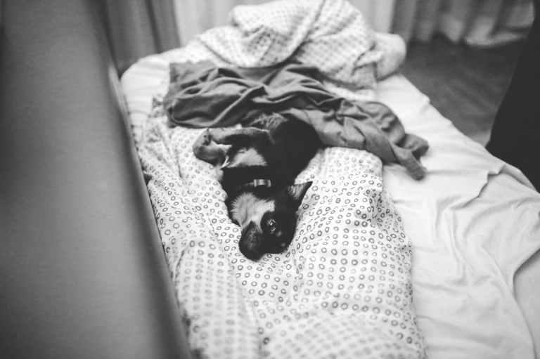 bed-dog-cute-lying.jpg