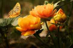flowers-background-butterflies-beautiful-87452.jpeg