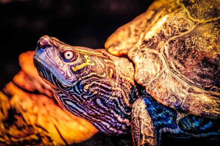 closeup photo of turtle