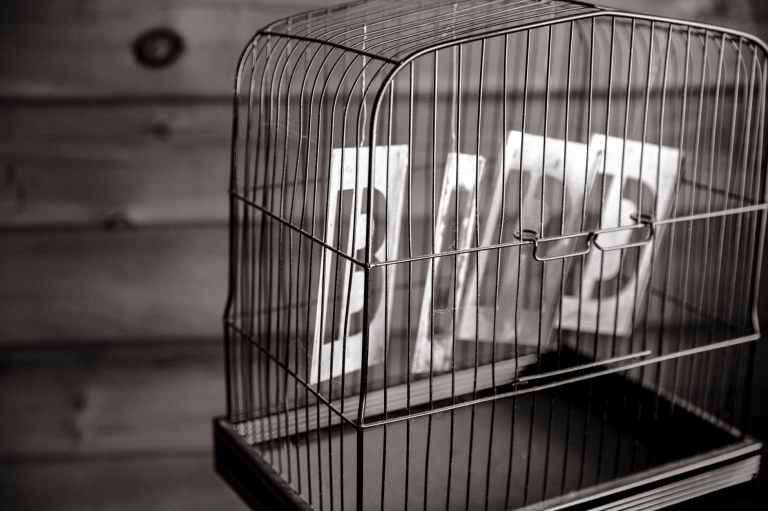 black and white bird birdcage cage