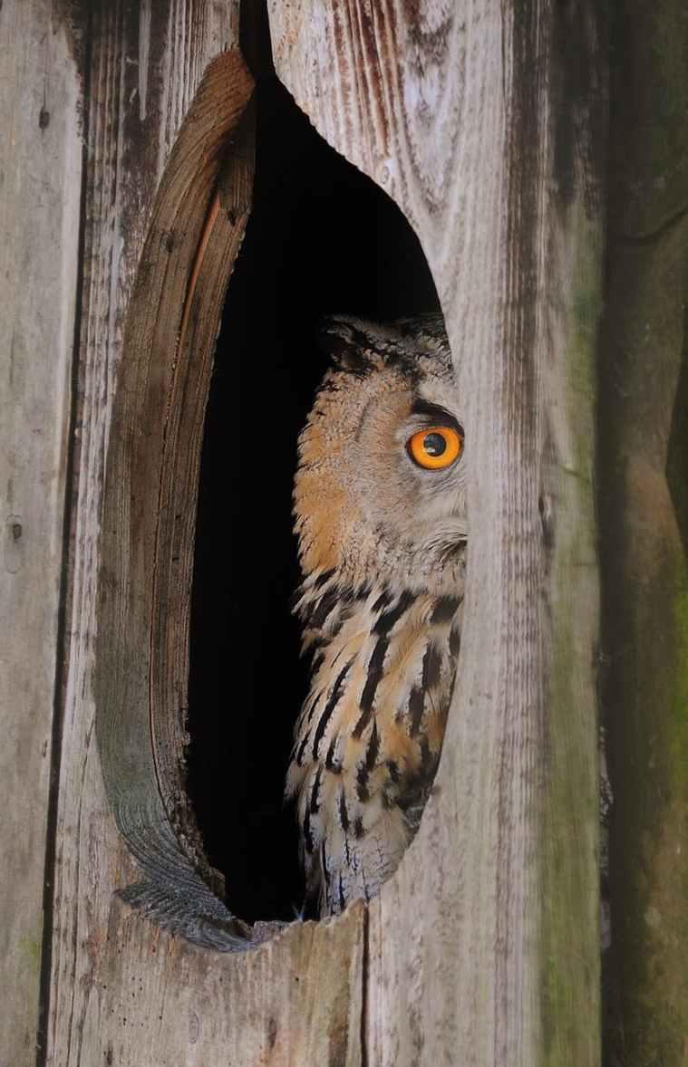 bird animal owl