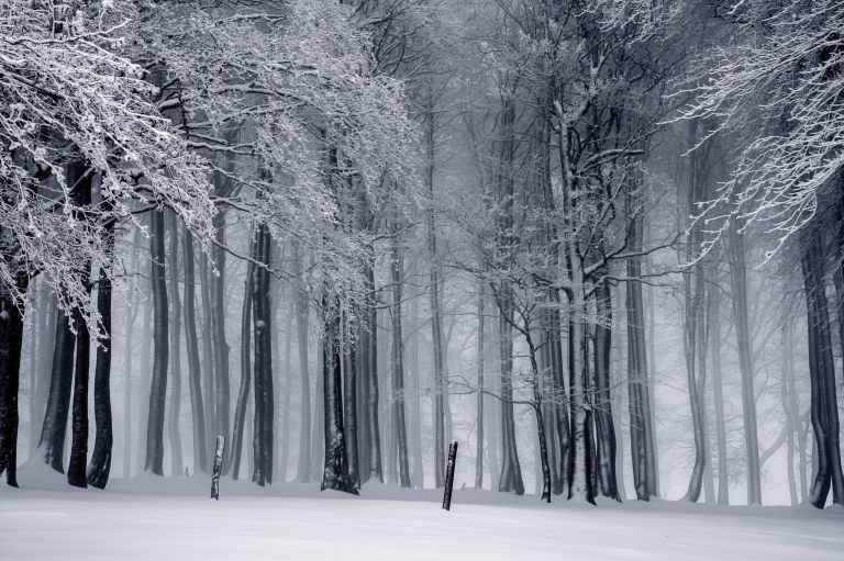 black and white cold fog forest