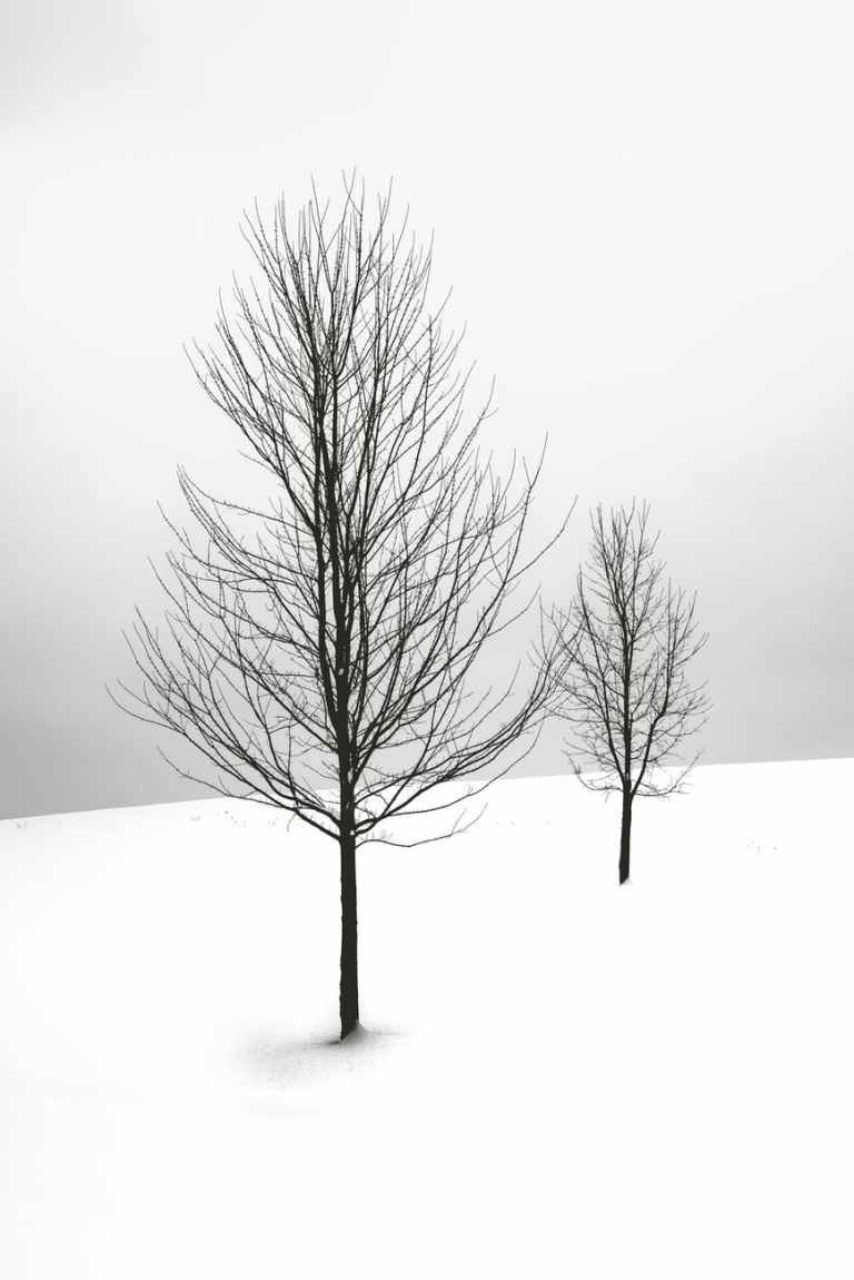 two bare trees